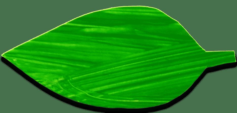 basilicum blaadje